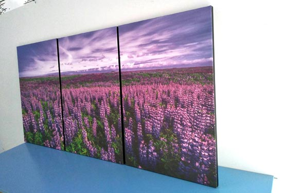 ภาพติดผนัง ห้องนอน สีม่วง รีวิวทุ่งลาเวนเดอร์