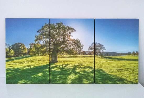 รูปติดผนัง ต้นไม้ใหญ่ แต่งห้องสีเขียว