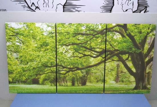 ภาพติดผนัง ต้นไม้สีเขียว
