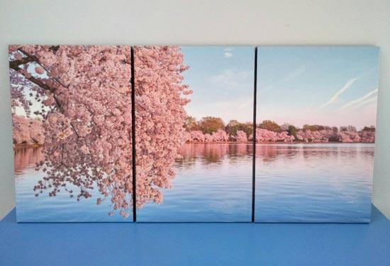 รูปภาพติดผนังห้องนอน ดอกซากุระสีชมพู