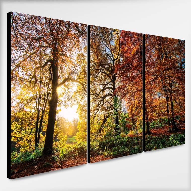 รูปภาพติดผนัง วิวป่าฤดูใบไม้ร่วง