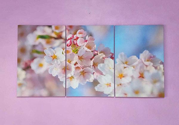 รูปติดผนัง ดอกซากุระ สีชมพู สวยๆ