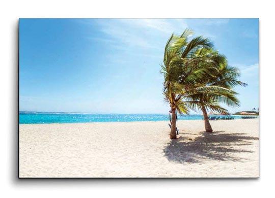 ภาพติดผนัง ทะเล ต้นไม้พร้าว ชายหาด