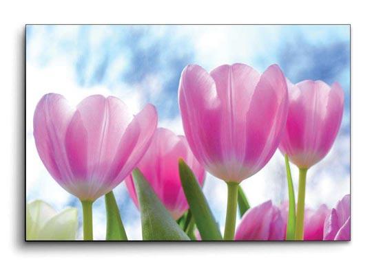 กรอบรูปลอย ดอกทิวลิป สีชมพู