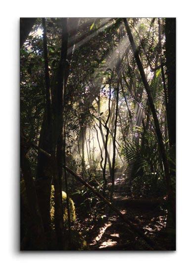 กรอบรูปแคนวาส ป่า กับ แสงแดด