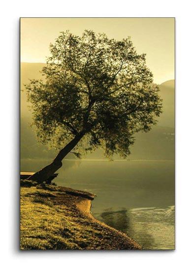 ภาพติดผนัง ต้นไม้ริมน้ำ สงบ