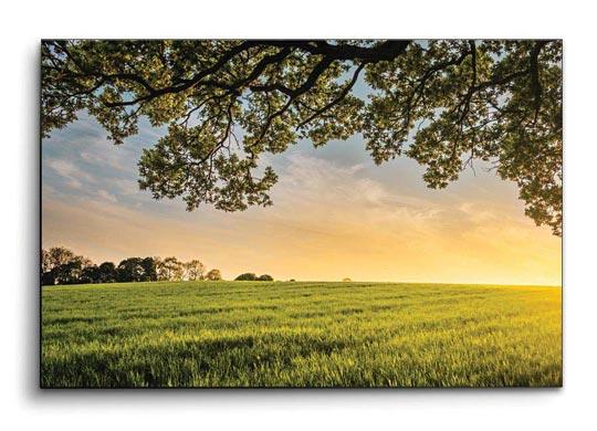 กรอบรูป ทุ่งหญ้า ต้นไม้