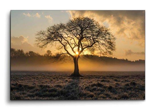 ภาพติดผนัง ต้นไม้ สีน้ำตาล