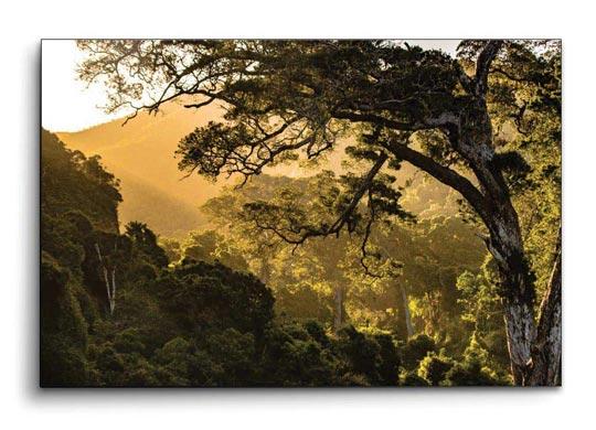 ภาพติดผนัง ป่า แสงแดด