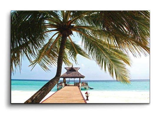 กรอบรูปทะเล ต้นมะพร้าว มัลดีฟ