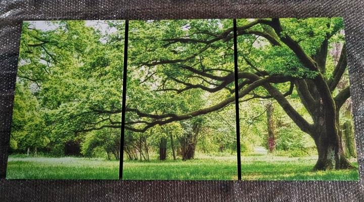 ภาพติดผนัง วิวต้นไม้ สวย ขายดี