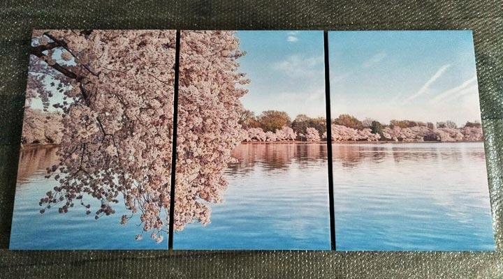 ภาพกรอบลอย แคนวาส รูปต้นดอกซากุุระ