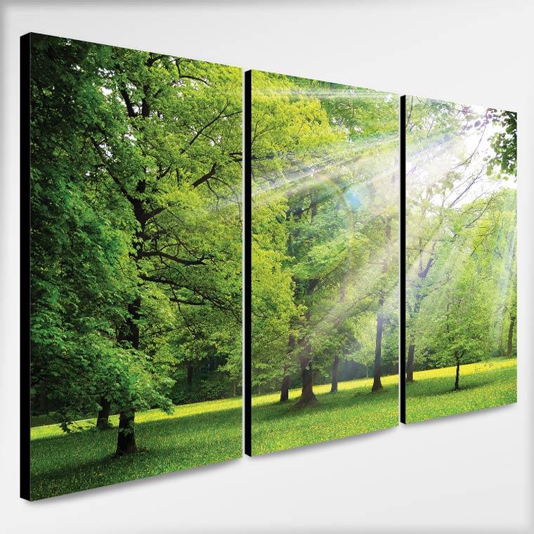 ภาพติดผนัง ธรรมชาติ ต้นไม้กับแสงอาทิตย์