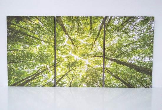 ภาพติดผนัง ต้นไม้ ธรรมชาติ แต่งห้องสีเขียวอ่อน